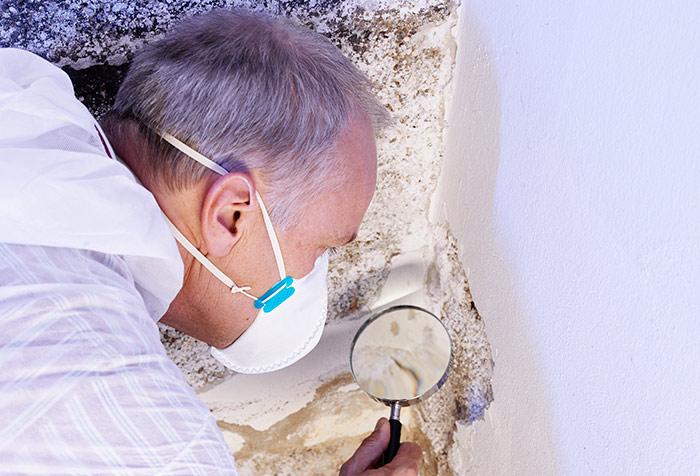 Diagnostic termites à Piriac-sur-Mer
